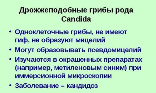 Кандидозная разновидность цистита развивается в результате поражения грибком Candida слизистой оболочки, выстилающей полость мочевого пузыря
